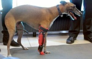 Romina the galgo - 3D printed leg