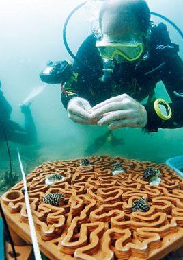 3D Printed Coral