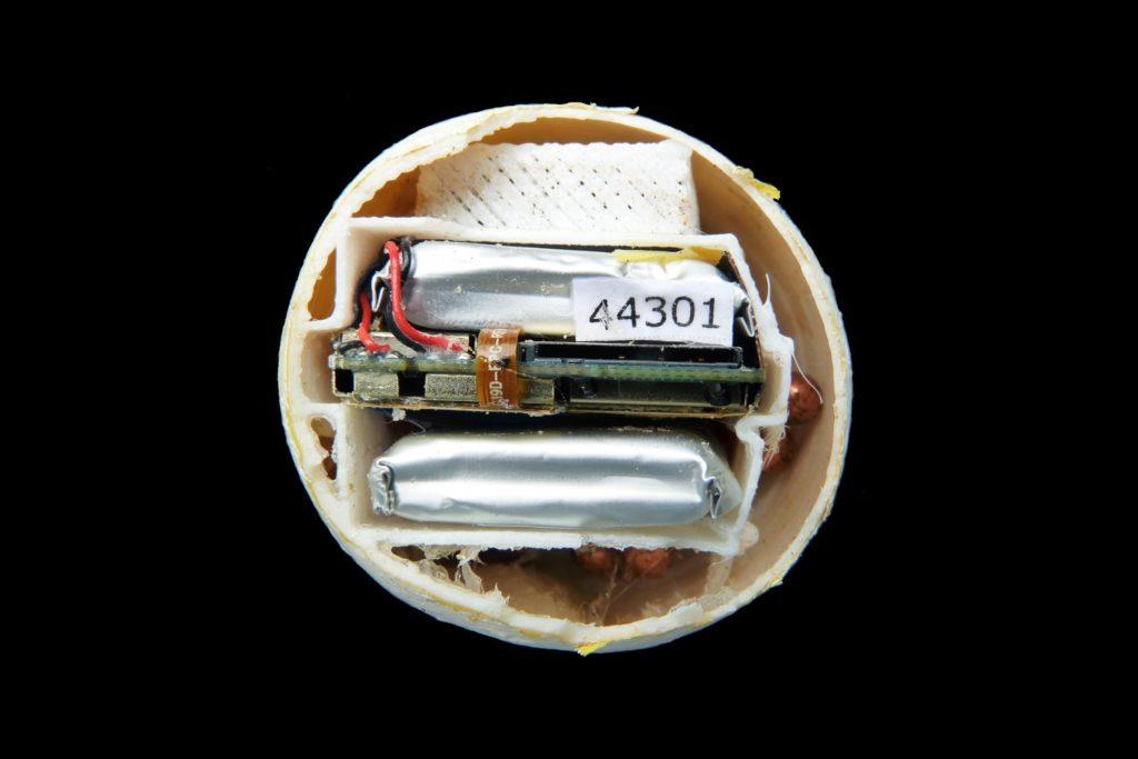 Inside look at an InvestEGGator decoy egg